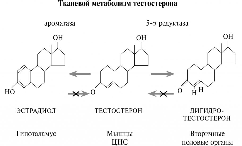 Почему тестостерон конвертируется в дегидротестерон