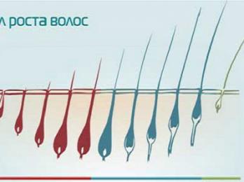 Характеристика фаз роста волос на голове