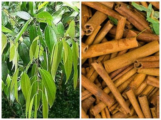 Листья и кора дерева
