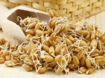 Оздоровление волос с маслом зародышей пшеницы