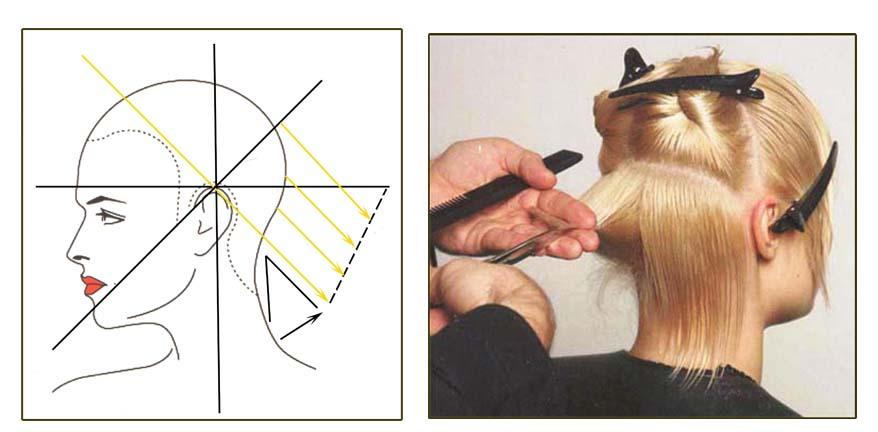 Разработка технологии градуированной стрижки