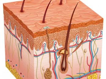 Какие нормы выпадения волос в день?