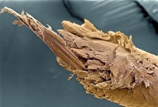 Секущийся волос под микроскопом