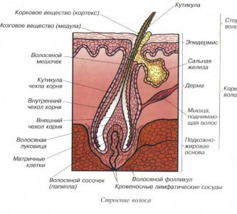 Как лечить себорею кожи головы в домашних условиях?